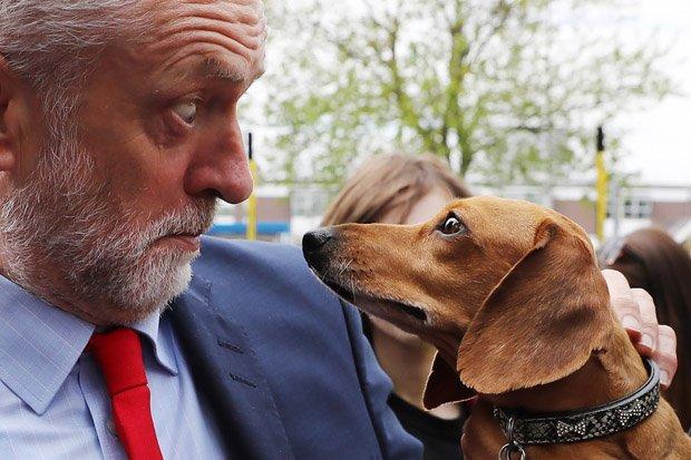 Лейбористы решили  поддержать права любителей животных